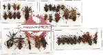 Scientific lot no. 333 Heteroptera (34 pcs)