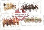 Scientific lot no. 27 Heteroptera (22 pcs)