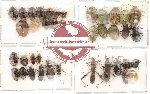 Scientific lot no. 28 Heteroptera (39 pcs)