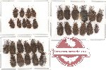 Scientific lot no. 29 Heteroptera (32 pcs)