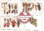 Scientific lot no. 37 Heteroptera (35 pcs A, A-)