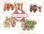 Scientific lot no. 39 Heteroptera (21 pcs A, A-, A2)