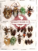 Scientific lot no. 42 Heteroptera (20 pcs A, A-, A2)
