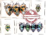 Scientific lot no. 44 Heteroptera (9 pcs A, A-, A2)
