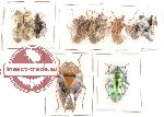 Scientific lot no. 45 Heteroptera (15 pcs A, A-, A2)