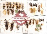 Scientific lot no. 46 Heteroptera (40 pcs A, A-, A2)