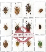 Scientific lot no. 171 Heteroptera (12 pcs A, A2)