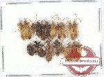 Scientific lot no. 405 Heteroptera (19 pcs)
