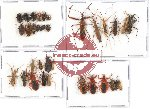 Scientific lot no. 403 Heteroptera (33 pcs A, A-, A2)
