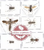 Scientific lot no. 7A Formicidae (24 pcs A, A-, A2)
