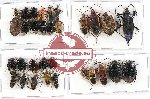 Scientific lot no. 411 Heteroptera (31 pcs A, A-, A2)