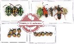 Scientific lot no. 435 Heteroptera (19 pcs A, A-, A2)