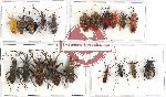 Scientific lot no. 432 Heteroptera (20 pcs - 10 pcs A2)