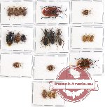 Scientific lot no. 418 Heteroptera (21 pcs A, A-, A2)