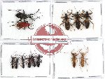 Scientific lot no. 430 Heteroptera (13 pcs)