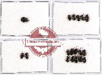 Scientific lot no. 429 Heteroptera (18 pcs)