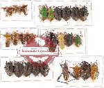 Scientific lot no. 364 Heteroptera (mainly Pentatomidae) (25 pcs A, A-, A2)