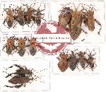 Scientific lot no. 450 Heteroptera (Coreidae) (16 pcs A, A-, A2)