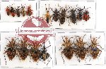 Scientific lot no. 431 Heteroptera (18 pcs A, A-, A2)