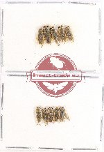 Scientific lot no. 384 Heteroptera (10 pcs)