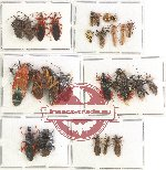 Scientific lot no. 369 Heteroptera (mostly Reduviidae) (26 pcs A, A-, A2)