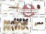 Scientific lot no. 560 Heteroptera (38 pcs)