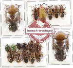 Scientific lot no. 568 Heteroptera (18 pcs)