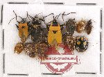 Scientific lot no. 435A Heteroptera (11 pcs)