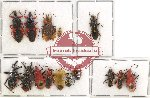 Scientific lot no. 460 Heteroptera (15 pcs A, A-, A2)