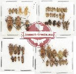 Scientific lot no. 467 Heteroptera (52 pcs)