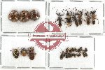 Scientific lot no. 459 Heteroptera (29 pcs)