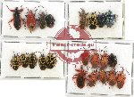 Scientific lot no. 462 Heteroptera (22 pcs)