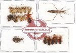 Scientific lot no. 581 Heteroptera (27 pcs A, A-, A2)