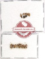 Scientific lot no. 660 Heteroptera (18 pcs)