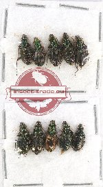 Scientific lot no. 391 Carabidae (10 pcs A, A-, A2)
