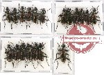 Scientific lot no. 380 Carabidae (19 pcs A, A-, A2)