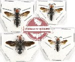 Scientific lot no. 259 Hymenoptera (4 pcs)