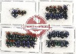 Scientific lot no. 236 Chrysomelidae (39 pcs)