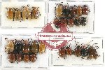 Scientific lot no. 237 Chrysomelidae (28 pcs)