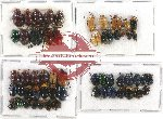 Scientific lot no. 240 Chrysomelidae (56 pcs)