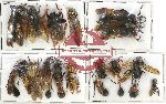 Scientific lot no. 281 Hymenoptera (15 pcs)