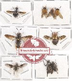 Scientific lot no. 46 Diptera (9 pcs A-, A2)
