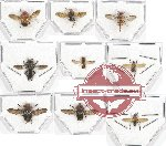Scientific lot no. 44 Diptera (9 pcs A-, A2)