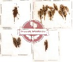 Scientific lot no. 2 Orthoptera (A, A-, A2) (18 pcs)