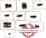 Scientific lot no. 6 Ostomidae (26 pcs)