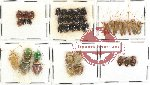 Scientific lot no. 79 Heteroptera (43 pcs)