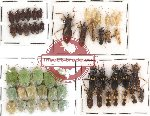 Scientific lot no. 69 Heteroptera (53 pcs)