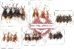Scientific lot no. 85 Heteroptera (29 pcs A-, A2)