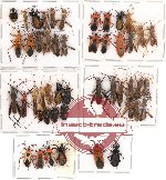 Scientific lot no. 82 Heteroptera (48 pcs A-, A2)