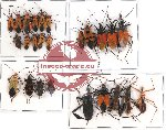 Scientific lot no. 86 Heteroptera (25 pcs A-, A2)